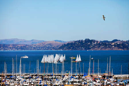 Group of sailboats in San Francisco Bay against the backdrop of the city of Sausolito