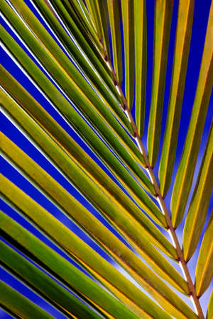 Green palm leaf. Natural background