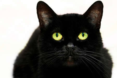 Beautiful black cat on white background . Standard-Bild