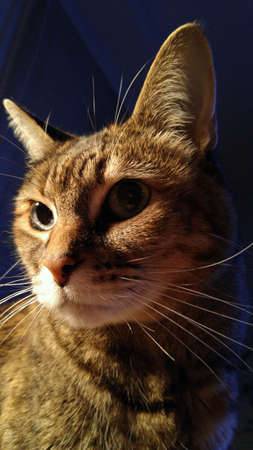 Tabese 猫の深刻な態度