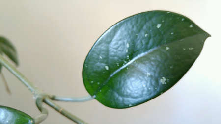 Isolated green leaf with plain background