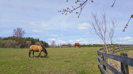 Horse grazing on grass on a sunny afternoon