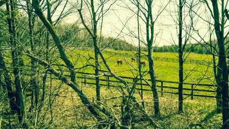 Horses in field hidden behind trees