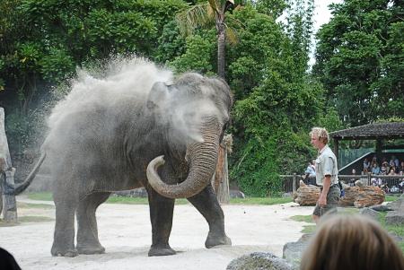 handler: handler and elephant