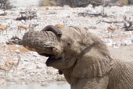 pozo de agua: Muddy elephant at waterhole. Seen and shot on selfdrive safari tour through natioal parks in namibia, africa.
