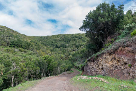 depending: way into the mystic laurel wood in the center national park in gomera, spain. Gomera is one of the most attractive canary islands, depending to spain. It is a vulcan island. you can reach gomera by taking the ferry from teneriffa. No international flights
