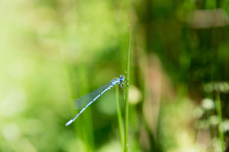 Dragon Fly seen and shot in spring 2016 at hoehenfelder sea, germany, europe