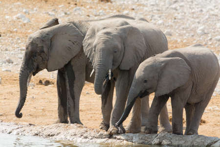 pozo de agua: Elephant family with calf at waterhole seen in namibia