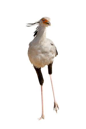 Secrétaire d'oiseaux en Namibie