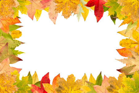 wilting: Seasonal frame of autumnal maple leaves isolated on white background