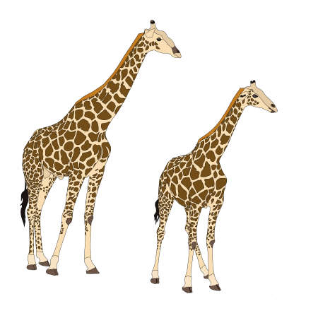 Two giraffes standing - digitally hand drawn Illustration isolated on white background