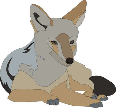 Portrait of a lying blackbacked jackal, hand drawn vector illustration isolated on white background  イラスト・ベクター素材