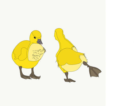 Portrait of a two joking and funny moving graylag goose chickens, hand drawn vector illustration isolated on white background