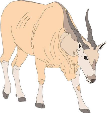 Portrait of an eland antelope, hand drawn vector illustration isolated on white background Illustration