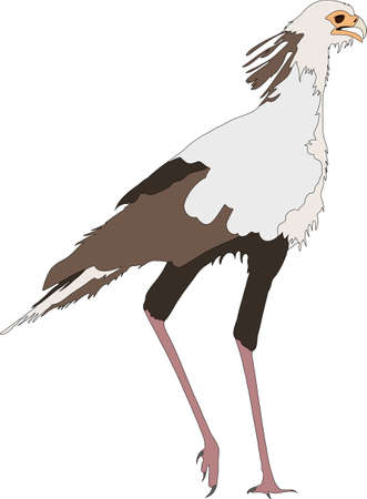 Portrait Of A Standing Secretary Bird Hand Drawn Vector Illustration Isolated On White Background