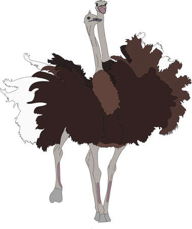 Portrait of two fighting ostriches, hand drawn vector illustration isolated on white background