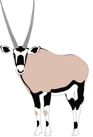 Portret van een gemsbok of oryx gazella antilope, uitgevoerd, hand getrokken vectorillustratie geïsoleerd op een witte achtergrond
