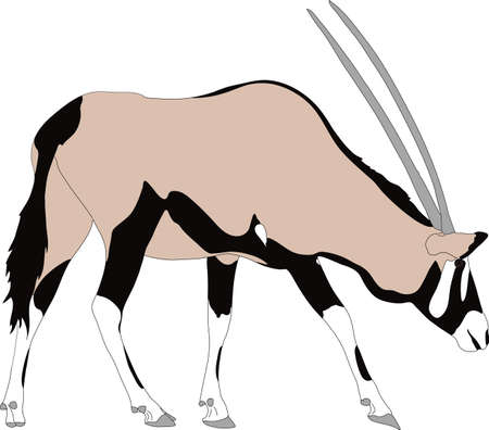 Portrait of a gemsbok or oryx gazella antelope, running, hand drawn vector illustration isolated on white background