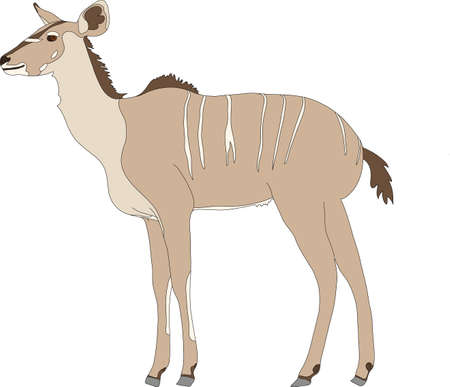 Portrait of a greater kudu antelope, hand drawn vector illustration isolated on white background Illustration
