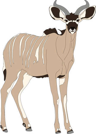 mammalia: Portrait of a greater kudu antelope, hand drawn vector illustration isolated on white background Illustration