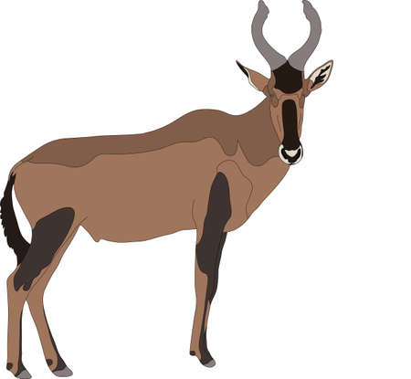 mammalia: Portrait of a red hartebeest antelope, hand drawn vector illustration isolated on white background Illustration