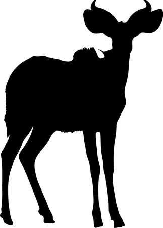 mammalia: Silhouette of a standing kudu antelope, hand drawn vector illustration isolated on white background. Illustration
