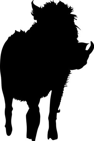 mammalia: Silhouette of a funny moving standing warthog, hand drawn vector illustration isolated on white background Illustration