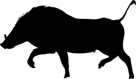 Silhouette of a funny moving standing warthog, hand drawn vector illustration isolated on white background Illustration