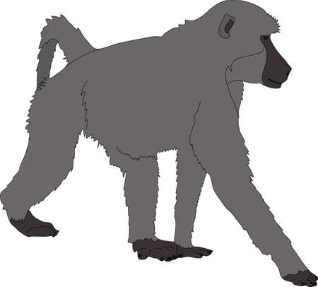 Hand drawn portrait of a wild  baboon - colored vector Illustration isolated on white background Illustration