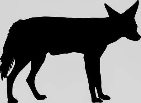 mammalia: Hand drawn silhouette of a wild black backed jackal - Illustration, black isolated on white background