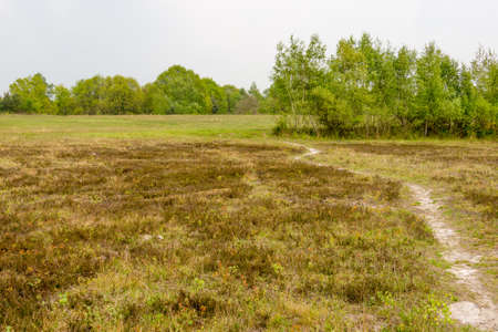 view of a landscape of heather moor - seen at nature reserve wahner heide near cologne, germany Stock Photo