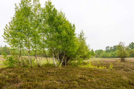 view of a landscape of heather moor - seen at nature reserve wahner heide near cologne, germany Stok Fotoğraf