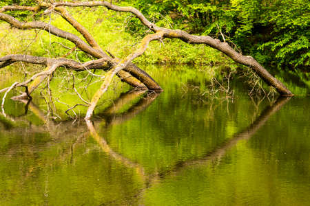 view of a lake with reflection of trees - seen at nature reserve wahner heide near cologne, germany