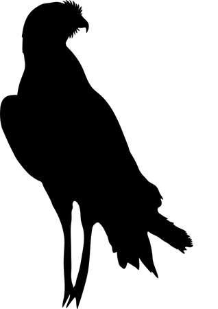 goshawk: View on the silhouette of a chanting goshawk - digitally hand drawn vector illustraion