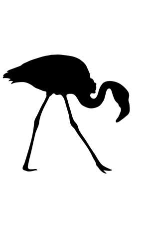 cutouts: View on the silhouette of a flamingo - digitally hand drawn vector illustraion