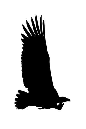 View on the silhouette of a african vulture - digitally hand drawn vector illustraion Illustration