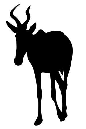 illustraion: View on the silhouette of a red hartebeest - digitally hand drawn vector illustraion Illustration