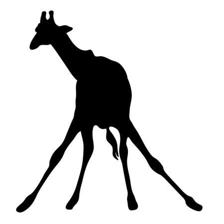 illustraion: View on the silhouette of a giraffe - digitally hand drawn vector illustraion Illustration