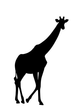 View on the silhouette of a giraffe - digitally hand drawn vector illustraion Ilustração