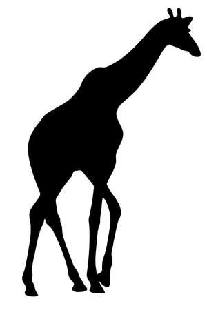 Mening over het silhouet van een giraf - digitaal hand getrokken vectorillustraion