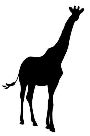 View on the silhouette of a giraffe - digitally hand drawn vector illustraion Illustration
