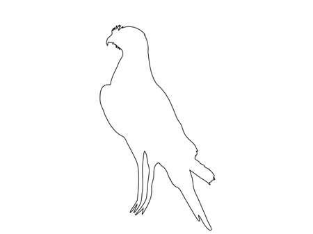 goshawk: Outline of an african Chanting Goshawk - digitally handdrawn illustration on white background Illustration