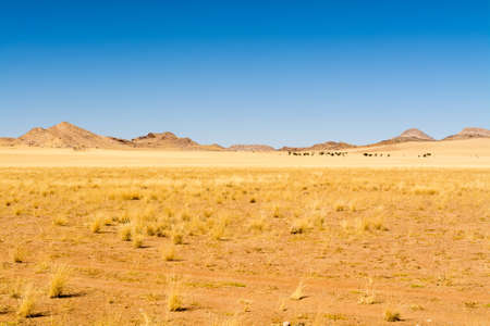 view of a scenery inside namib naukluft park, seen in namibia, africa