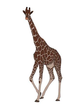 Digitally Handdrawn Illustration of a wildlife giraffe isolated on white background