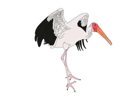 Digitally Handdrawn Illustration of a wildlife stork isolated on white background