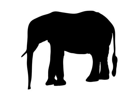 Digitally handdrawn Silhouette of a elephant isolated on white background Illustration