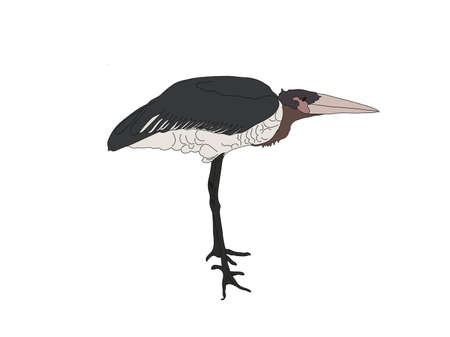 Digitally Handdrawn Illustration of a wildlife sea bird isolated on white background
