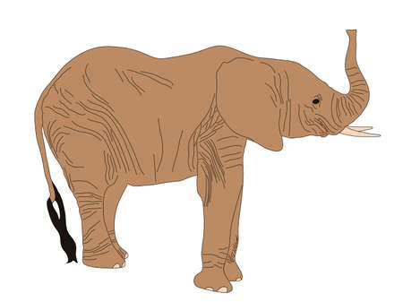 Digitally Handdrawn Illustration of a wildlife desert elephant isolated on white background Ilustração