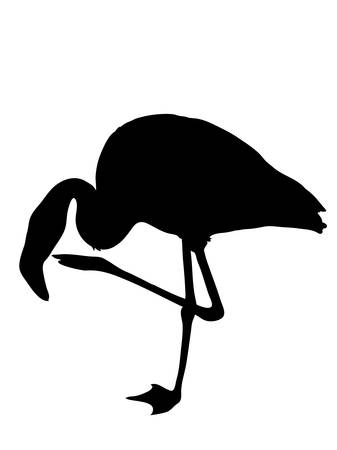 Digitally handdrawn Silhouette of a flamingo isolated on white background