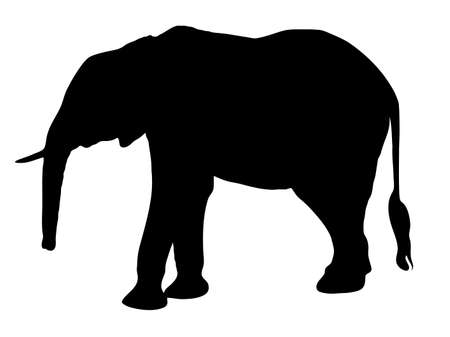 Digitally handdrawn Silhouette of a elephant isolated on white background Ilustração